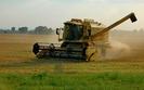 Resort rolnictwa chce zwi�kszy� dop�aty do uprawy ro�lin str�czkowych