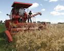Wiadomo�ci: Unijne wsparcie dla rolnictwa. Grupy producenckie dostan� wi�cej?