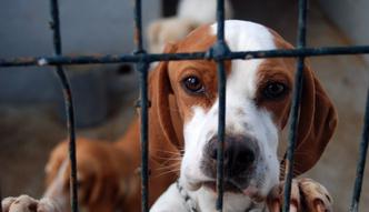Nie tylko tw�j wiek zdecyduje o obowi�zku zap�acenia podatku od psa