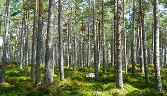 Grunty w Polsce. Polska lasami i ziemi� roln� stoi