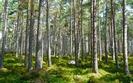 NIK: sporo nieprawidłowości przy dotacjach na ochronę przyrody