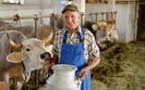Ograniczenie produkcji mleka w Polsce. Mleczarze oczekuj� unijnego wsparcia