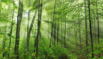 Nieruchomo�ci w Polsce. Bez poprawek Senatu do noweli pozwalaj�cej na pierwokup prywatnych las�w przez pa�stwo