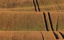 ANR w tym roku sprzeda 125 tys. hektar�w ziemi