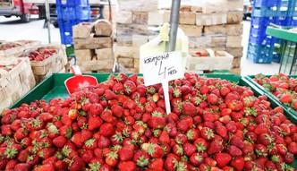 Rosjanie kupuj� przy granicy truskawki, bo u nich nie ma