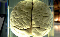 Zapalenie opon mózgowo-rdzeniowych