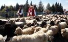 Włosi wywołali w Polsce kryzys. Górale idą do ministra