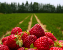 Wiadomo�ci: Spo�ycie  owoc�w i warzyw ro�nie. Trend ju� nied�ugo si� zmieni