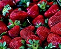 Wiadomo�ci: Efekt wiosennej aury we W�oszech: s� ju� pierwsze truskawki i karczochy