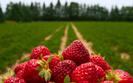 Spo�ycie  owoc�w i warzyw ro�nie. Trend ju� nied�ugo si� zmieni