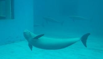 Europa odwraca si� od delfinari�w