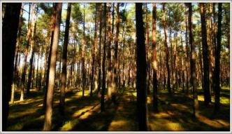 Ustawa o lasach wesz�a w �ycie. Zobacz, co si� zmieni�o
