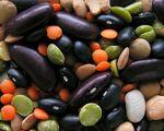 Ekstruzja a wartość pokarmowa roślin strączkowych