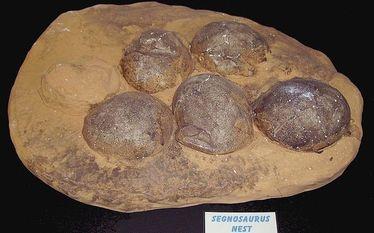Jaja dinozaur�w odnalezione w Hiszpanii