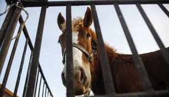 Na targach zwierz�t ignorowane przepisy. Ministerstwo zapowiada kontrole