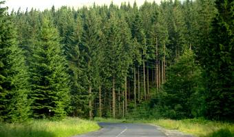 Giełda drzewna lasy państwowe