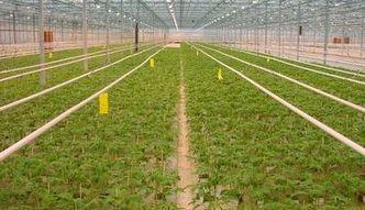 PIT 2016. Nowy formularz PIT/DS. To informacja o prowadzonych działach specjalnych produkcji rolnej