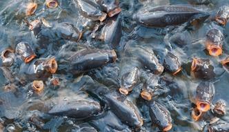 Nowe Prawo wodne. Rybacy chc� usuni�cia z projektu zapis�w o op�atach