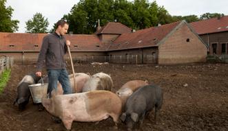 ASF na Ukrainie rozprzestrzenia si�. Nielegalny przyw�z �ywno�ci zagro�eniem dla polskich hodowli