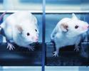 Wiadomo�ci: Zmiany w ustawie o ochronie zwierz�t do�wiadczalnych