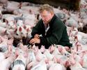 Wiadomości: Walka z ASF. Rolnicy dostaną dodatkowe pieniądze z Unii