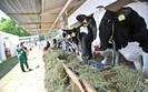 Rolnictwo w Polsce. Produkcja mleka coraz mniej op�acalna, hodowcy si� wycofuj�