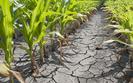 Ministerstwo rolnictwa wesprze poszkodowanych przez pogod�