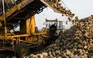 Plantatorzy burak�w chc� szybkiej prywatyzacji Krajowej Sp�ki Cukrowej