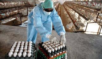 Ptasia grypa w Polsce. Rosja nie chce drobiu z ośmiu naszych województw