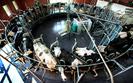 Limit produkcji mleka przekroczony. Jaka kara dla Polski?