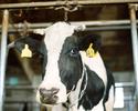 Koniec kwot mlecznych w UE. Nowe zasady od pocz�tku kwietnia