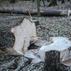 RPO skar�y do s�du decyzj� o zwi�kszeniu ci�� w Puszczy Bia�owieskiej