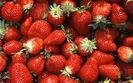 Rolnicy narzekaj� na niskie ceny truskawek w skupach