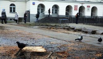 Wycinka drzew. Ministerstwo środowiska: robi się z tego problem polityczny