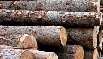 Dobra wiadomo�� dla naszego przemys�u. Bia�oru� wznawia eksport drewna