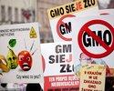 Wiadomości: Krajowi giganci rezygnują z pasz z GMO. Nowy branżowy standard