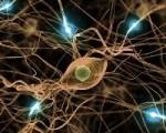 Trening umys�owy zmienia biochemi� m�zgu