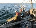 Wiadomo�ci: Fundusze unijne. 4 mln euro dla rybak�w