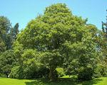 Sadzenie du�ego drzewa
