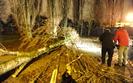 Walące się drzewa odcięły prąd 110 tys. odbiorców. Tauron chwalony przez ministra