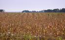 Susza w Polsce to ogromne problemy dla rolnik�w. Pomo�e im Komisja Europejska?
