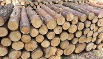 Przemysł meblarski potrzebuje więcej drewna