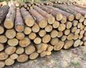 Wiadomości: Przemysł meblarski potrzebuje więcej drewna