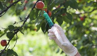 """Unijne kraje m�wi� """"stop GMO"""", ale tylko na niby"""