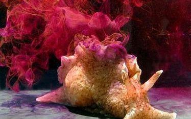 Zaj�c morski zatyka homarowi nos