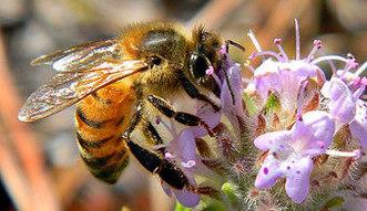 Przybywa le�nych pszcz� w barciach w pn-wsch Polsce