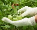 Wiadomo�ci: Uprawy GMO w Polsce? Jest ostateczna zgoda pa�stw cz�onkowskich na nowe przepisy
