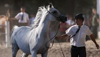 Mi�dzynarodowe Targi Pozna�skie b�d� organizowa� aukcj� koni arabskich