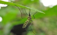 Zarodziec malarii zniszczony w 48 godzin