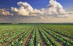 CORDIS Express: Bezpieczeństwo żywnościowe i zrównoważone rolnictwo